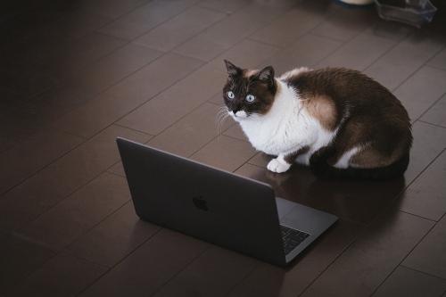 パソコンを操作するブロガー猫