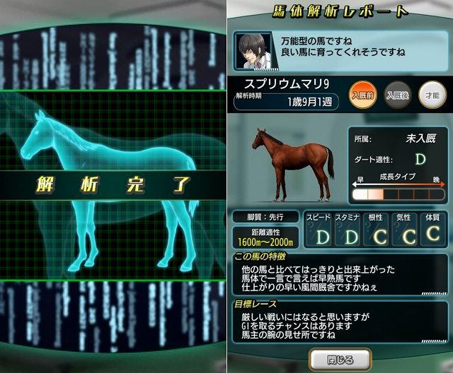 馬体解析レポート
